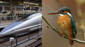 Algunos trenes, tienen un diseño inspirado en el largo y agudo pico del Martín pescador, que le permite volar al ras del agua sin perder energía
