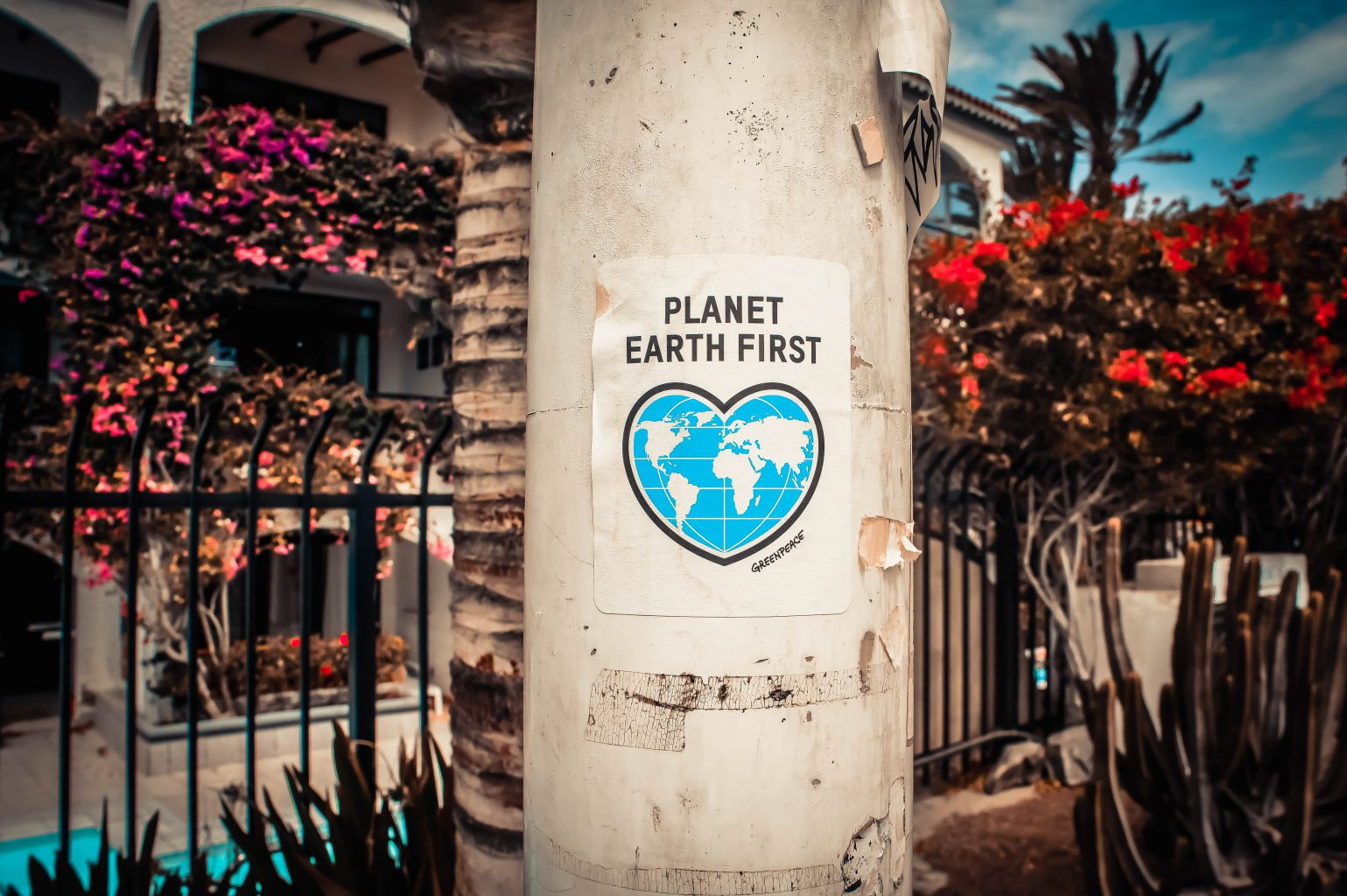 tree-planet-earth-first