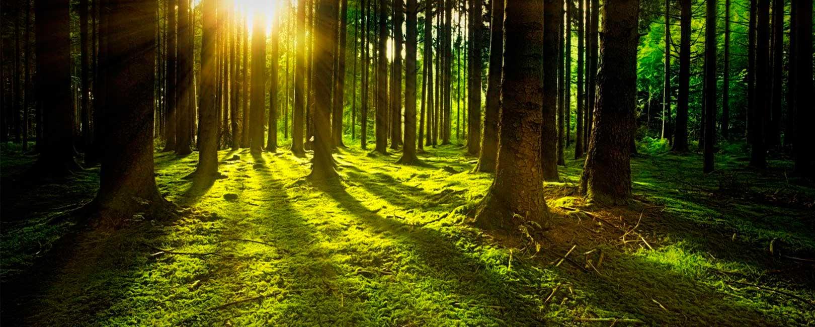 Ver más allá. Cómo ganar una perspectiva externa que nos permita ver el bosque